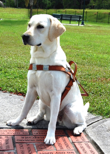 About Brooks Labradors True