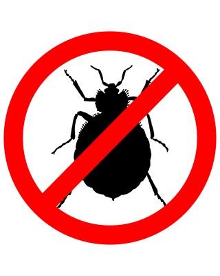 Detection Bedbug Dog