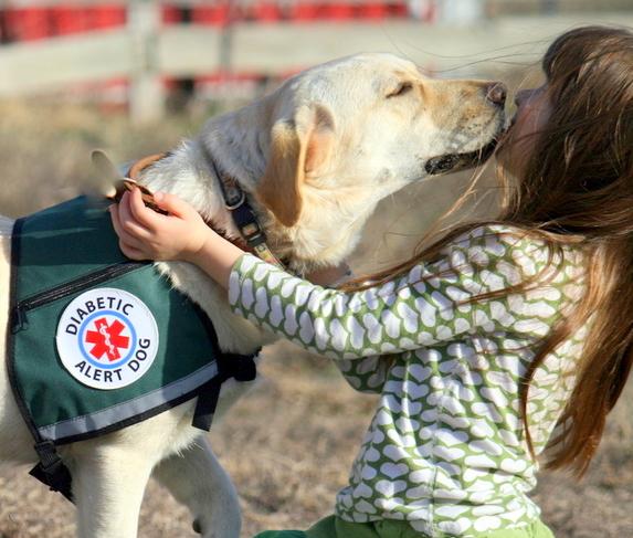 For Sale Diabetic Low Blood Sugar Alert Dogs