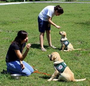 Training DAD Puppies